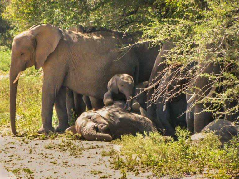 elephant resting under tree