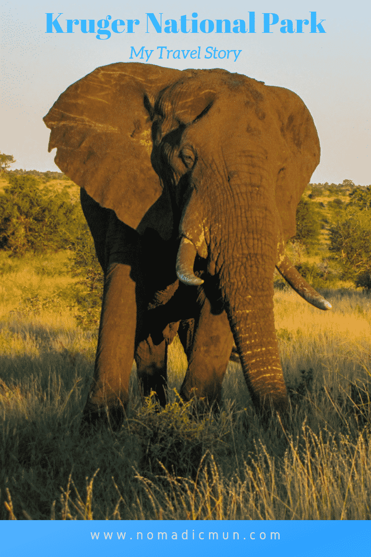 KNP elephant for Pinterest