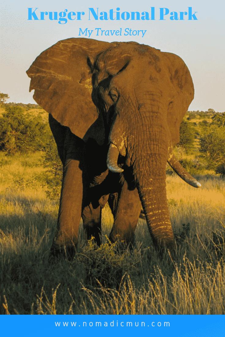 KNP elephant for Pinterest