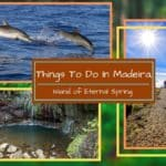 Best 15 Things to Do in Madeira, Portugal