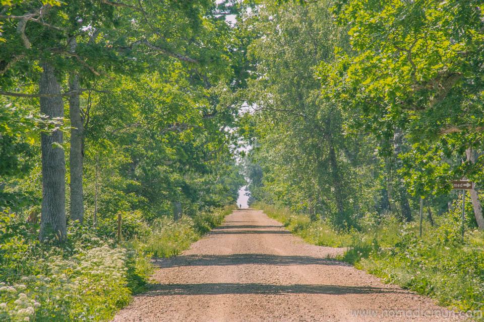 Loode Oak Forest saaremaa estonia